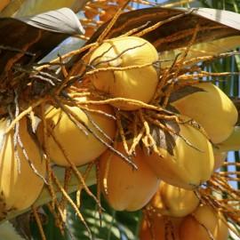 Masážny olej Kokosový panenský BIO