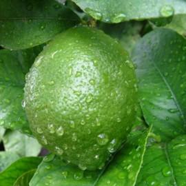 Sprchový gél Citrusový mix