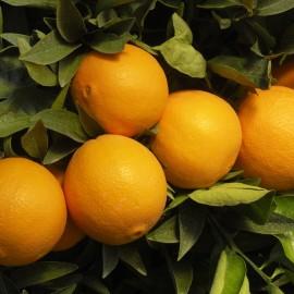 Masážny olej Pomaranč a zázvor - 100% prírodný