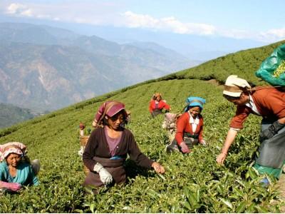 Láske a zdraviu fandia vône. Napríklad aj tá, patriaca jari a zelenému čaju.