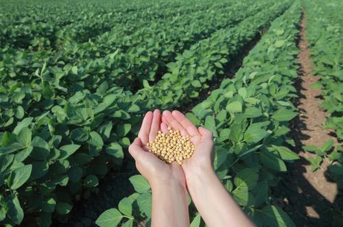 Sojove pole